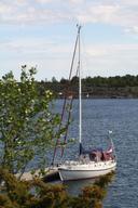 Danish Rose 39 Elske